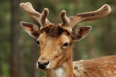 deer-1076245_1280